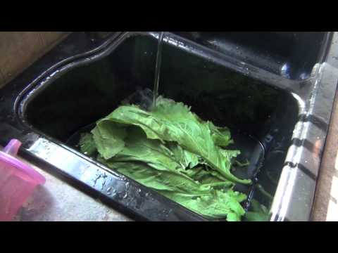 Mustard Greens: Harvesting, Blanching & Freezing