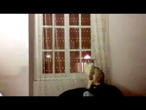 How to stop kitten shredding curtains