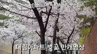 대림아파트 벚곷 만개영상