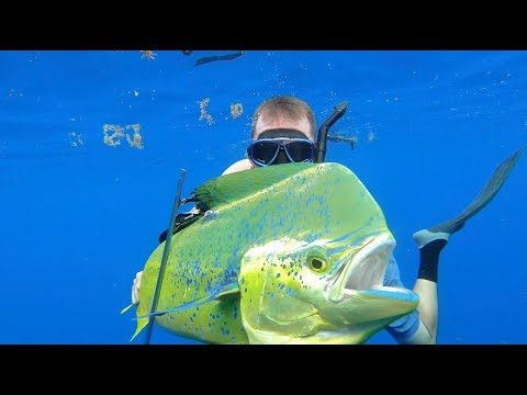Spearfishing for Bull Dolphin {Catch Clean Cook} Gourmet Dorado Fingers