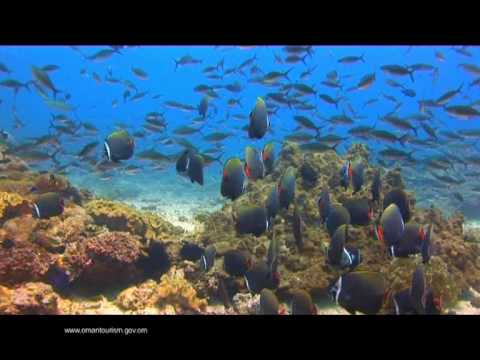 Oman Diving, Scuba Diving - Ministry Of Oman Tourism