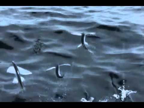 Live'n Fuze_et le poisson mystère
