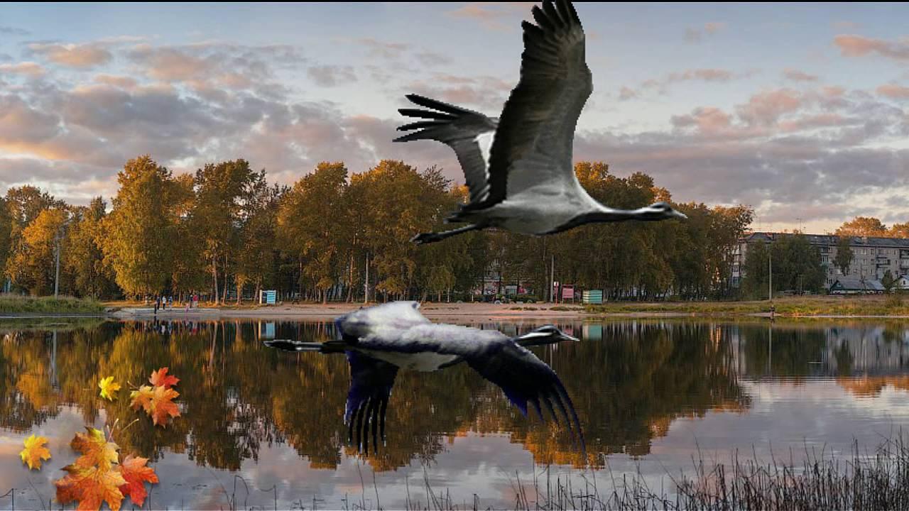 открытка летят журавли вот фото входе