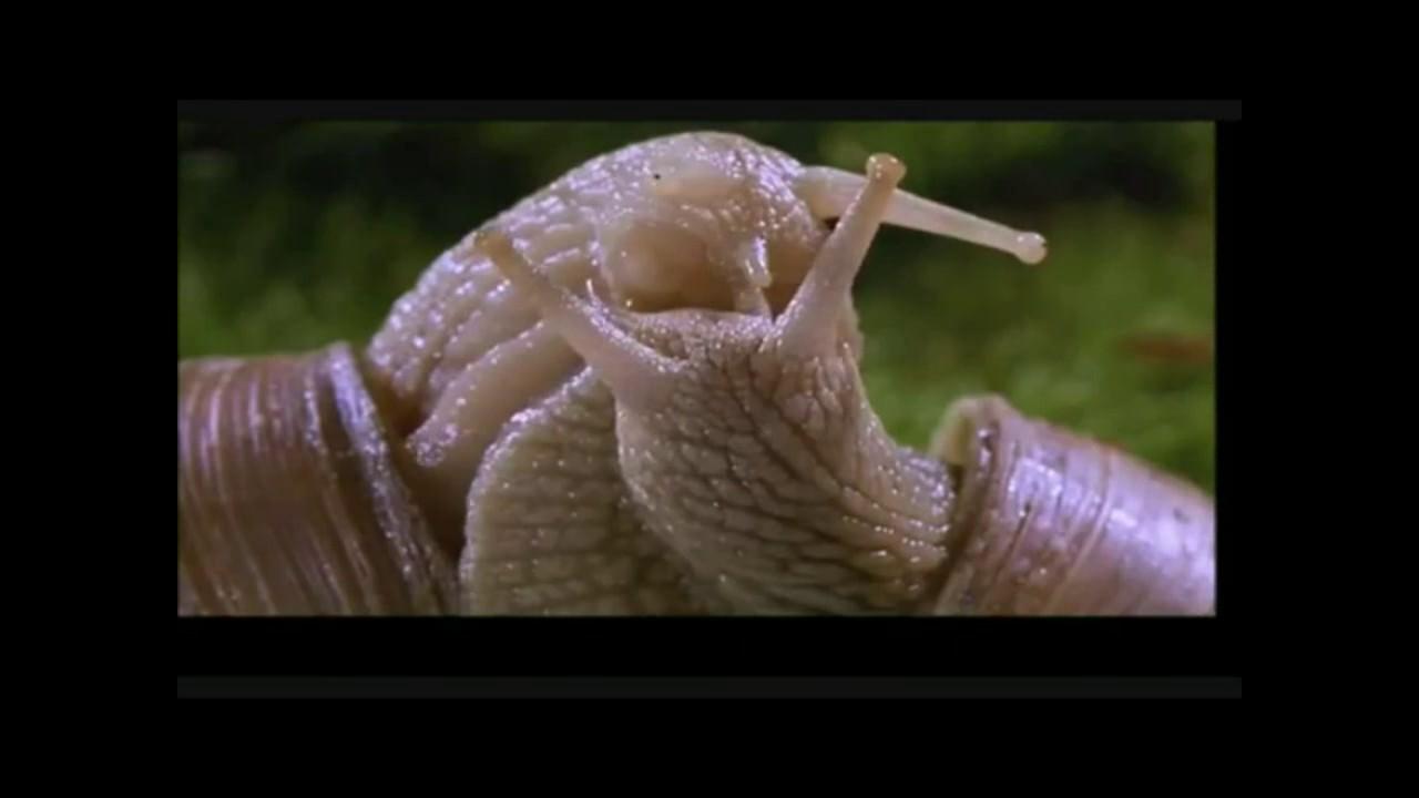 Snails having sex.