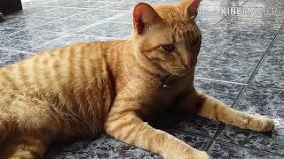 Cute Cats | Funny Cats | Cat Cleaning Body | Cat Videos