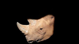 International conference to stop illegal wildlife trade kicks off in London