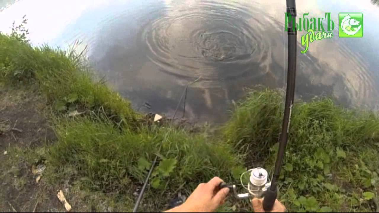 ловля карпа на технопланктон гейзер