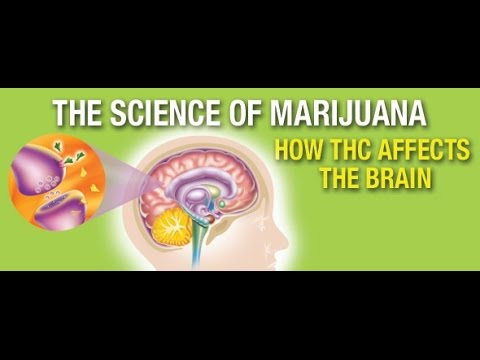 The Science Of Marijuana - How it affects the Brain