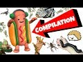 DANCING HOTDOG WITH ALL MY PETS [FUNNY COMPILATION]