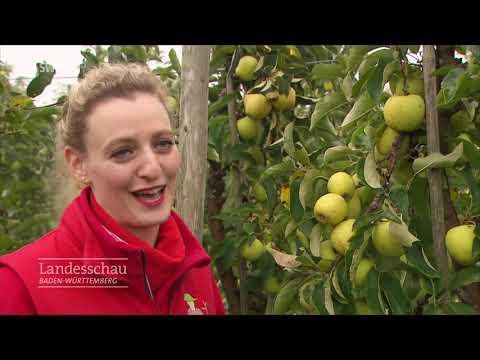 30.000 Kilo Äpfel
