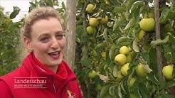 30.000 Kilo Äpfel zu verschenken | Landesschau Baden-Württemberg