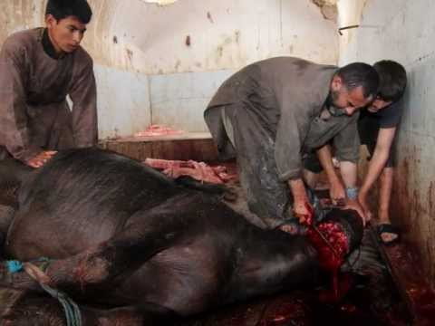 Afghan Slaughter