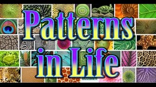 Episode 30: Patterns in Life