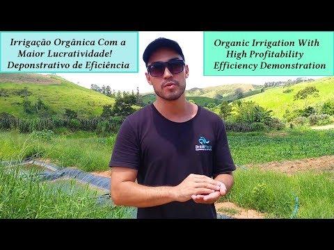 Irrigação Orgânica Profissional Com Descarte De Piscicultura