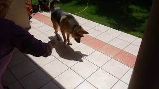 Dog Playing With Shadow (cute Alert)