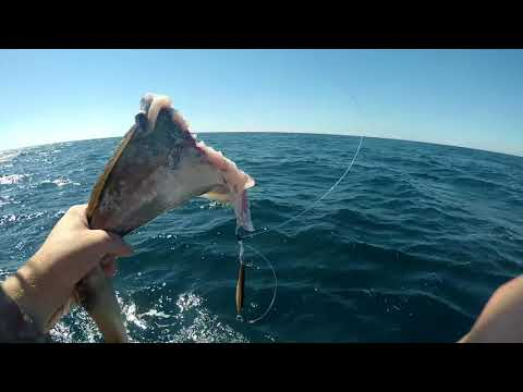 Pensacola Fl offshore fishing!! AJ,Snapper