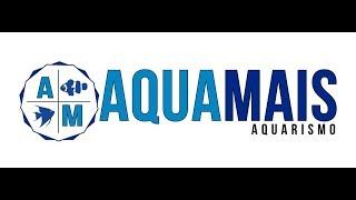 Série Lojas - AQUAMAIS Aquarismo
