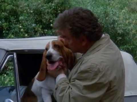 Columbo Hund