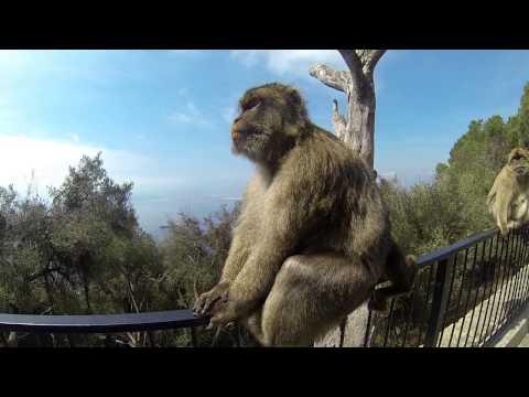 Gibraltar (25.09.2013) Upper Rock Nature Reserve