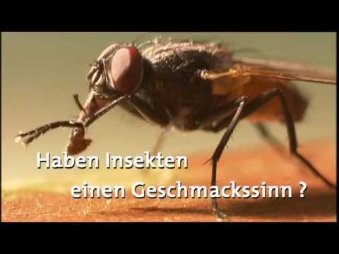 haben insekten einen geschmackssinn frage trifft planet schule youtube. Black Bedroom Furniture Sets. Home Design Ideas