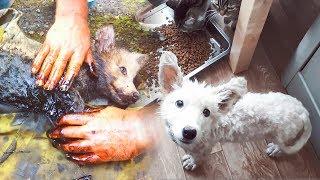 Черного щенка в гудроне сделали белым Чудесное спасение Приют для животных Дари добро Нск