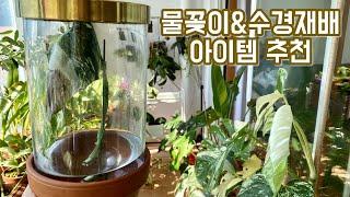 물꽂이, 수경재배 아이템 추천!! 이케아 유리돔 사용법…