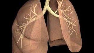 Akciğeri Temizleyen Besinler (6 öneri)