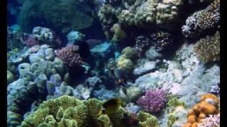 MAR ROSSO barriera corallina Marsa Alam