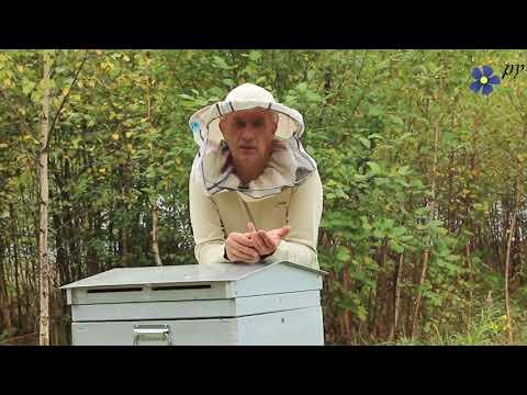 Способ избавиться от болезней пчел