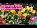Для тебя все цветы в этом сказочном мире mp3