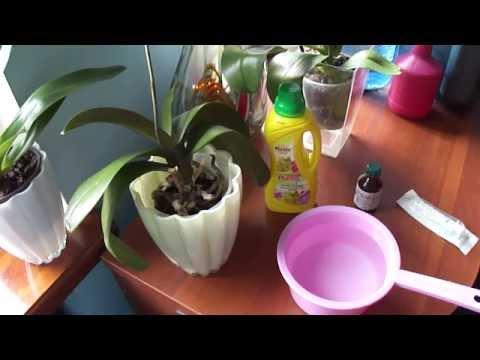 Три способа как разводить правильно удобрения для орхидей. Three ways to breed as well fertilizers.