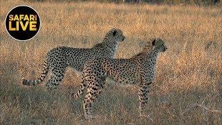 safariLIVE - Sunset Safari - June 17, 2019