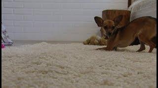 Как избавиться от запаха животного в квартире