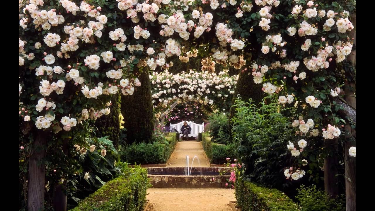 Roses Ideal For Pergolas Climbing Rose For Pergola Youtube