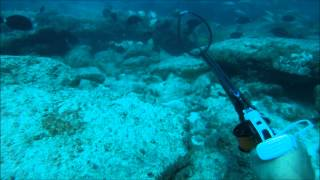 spearfishing oahu june august 2012