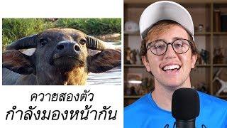 ฝรั่งโดนคนไทยหลอกด่า!! ฮาจนน้ำตาเล็ด!!!