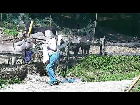 Cp Lee visits donkeys outside then Clover rolling end 1042017