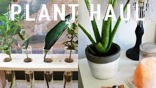 ❀ Plant Haul // Plant Collection ❀