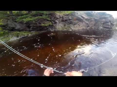 Fly Fishing For Fall Brook Trout In Eskasoni, NS