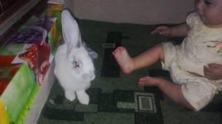Самые красивые кролики в мире