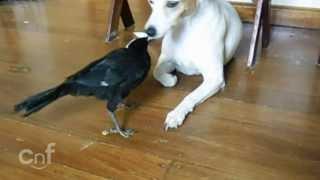 Un pájaro dándole de comer al gato y al perro