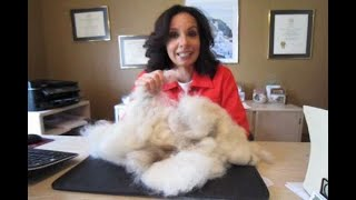 Building the world's largest dog fur ball