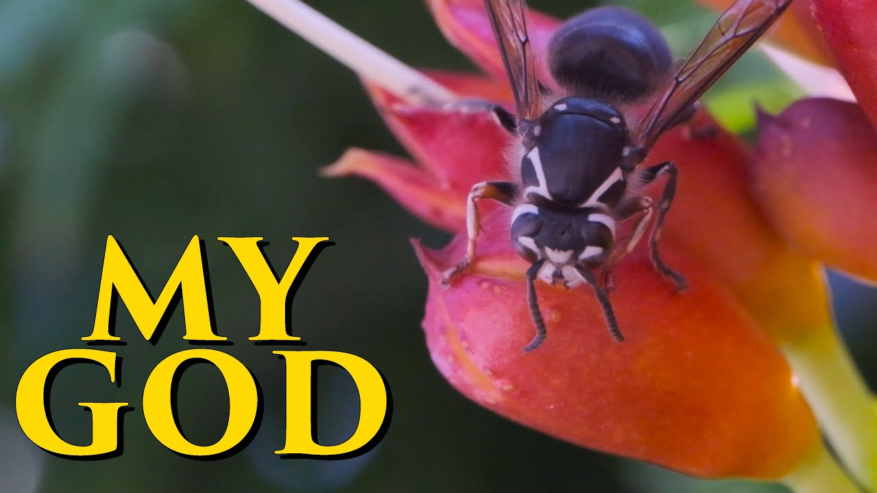 Highest Magnification Macro Lens Will Blow Your Insect Mind! (Pergear 60mm f2.8 2:1)