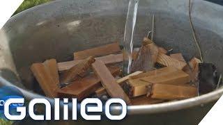 Wood-Food: Essen aus Holz? | Galileo | ProSieben