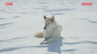 Одолевают волки
