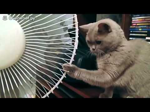 Коты и вентиляторы