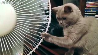 Коты и вентиляторы(, 2015-12-01T08:55:57.000Z)