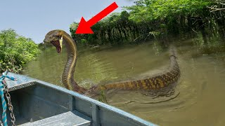 10 Most Dangerous Attacks In The Amazon Jungle