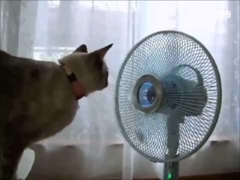 Сериал Черные кошки (2013/DVD) - смотреть все серии