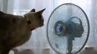 Смотреть животных  Смешные кошки